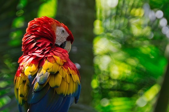 L'essència de Costa Rica