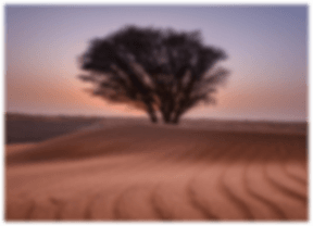 tree in the desert