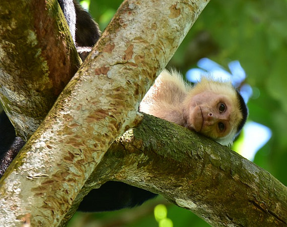 Descobrint Costa Rica
